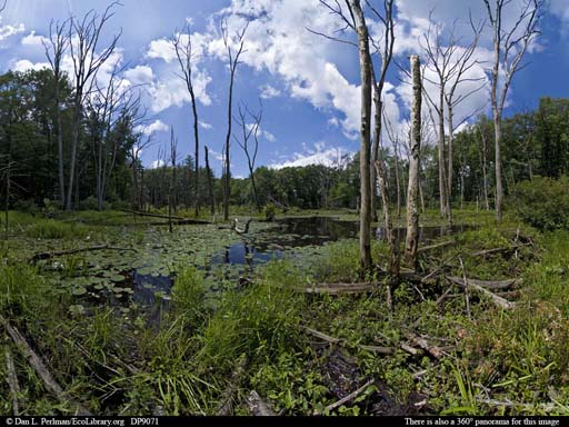Photo: Beaver pond and meadow. Dan L. Perlman.www.ecolibrary.org (Accessed 5/2014).