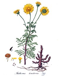 Anthemis tinctoria.commons.wikimedia.org. (Accessed 3/2014).